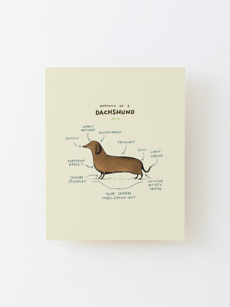 Alternate view of Anatomy of a Dachshund Mounted Print