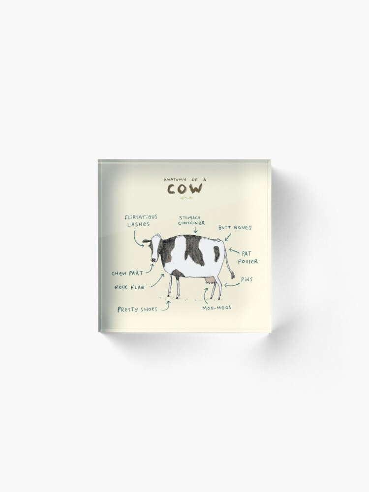 Alternate view of Anatomy of a Cow Acrylic Block