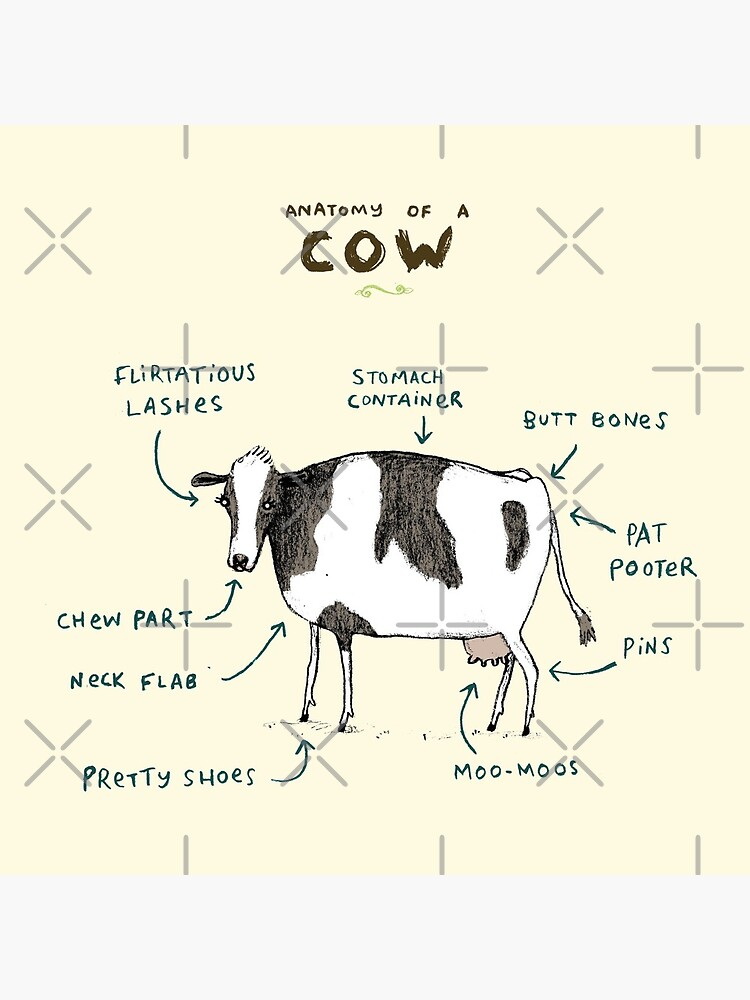 Anatomy of a Cow by SophieCorrigan