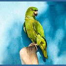 Green Amazon on blue by lgraham
