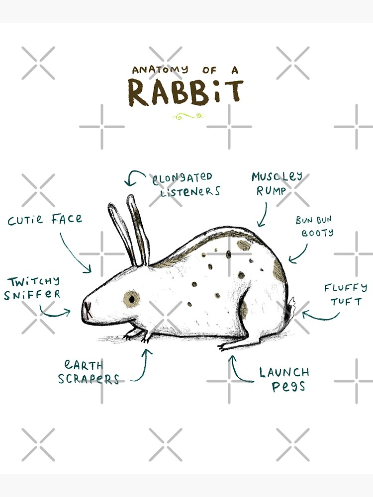 Anatomy of a Rabbit by SophieCorrigan