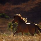 Sulphur Springs Mare by Sue Ratcliffe