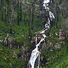 The Steavenson falls Marysville by Donovan Wilson
