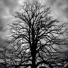 Tree Stance (view large) by linaji