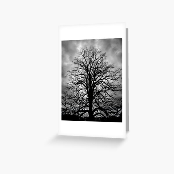 Tree Stance (view large) Greeting Card
