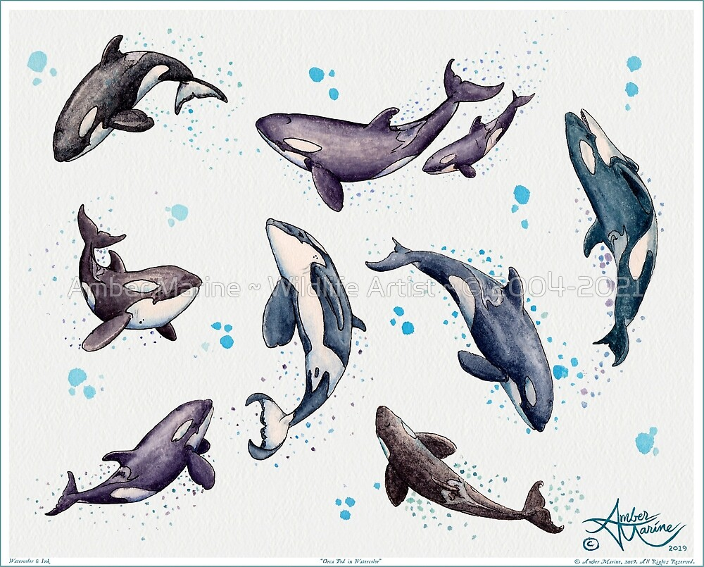 """""""Orca Pod in Watercolor"""" by Amber Marine, Killer Whale Art, © 2019 by Amber Marine ~ Wildlife Artist ~ © 2004-2021"""