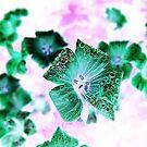 Photoshopped Flower 2 by Yvonne Carsley