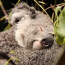 Nap time! by Steve Bullock