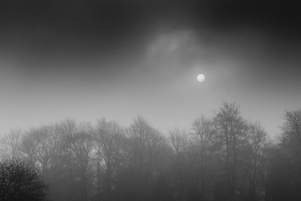 Winter Sun by Daniel Yates