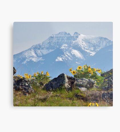 Mission Mountains Balsamroot Metal Print