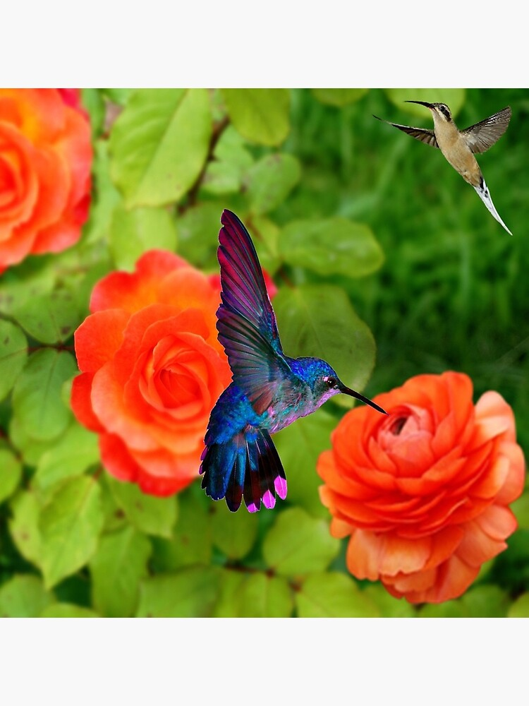 Roses Hummingbird Lover Gift Roses Hummingbird Tote Bag Cute Fun Animal Bird Art Tote