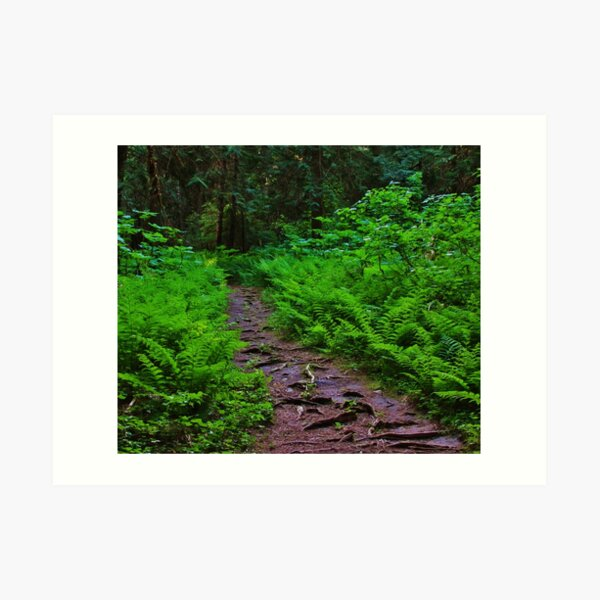 Path to the Old Cedars Art Print