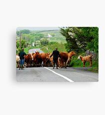 Rural Ireland Canvas Print