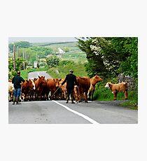 Rural Ireland Photographic Print