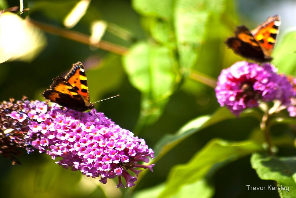Butterfly  #3 by Trevor Kersley