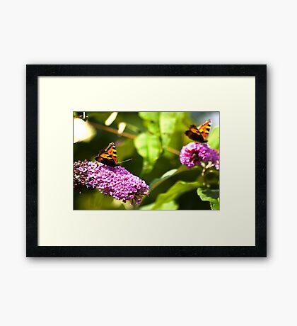 Butterfly  #3 Framed Print