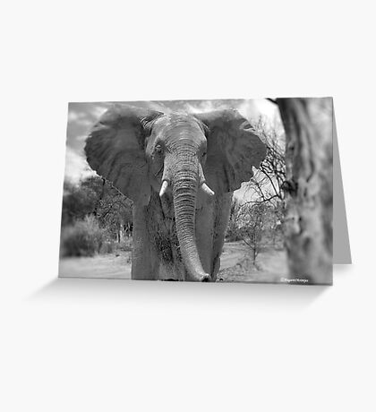 UP CLOSE AND PERSONAL WITH ELEPHANTS - SERIES  3 Greeting Card