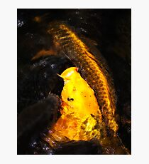 Natures Gold Photographic Print