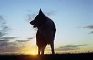 At the Sunset with Indy by Michael Haslam