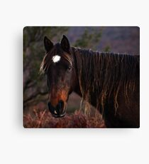 having a bad hair day Canvas Print