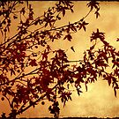 as autumn falls by Ingrid Beddoes