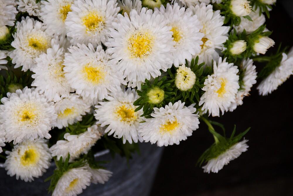 White Chrysanthemums by Skye Hohmann