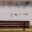 Lake Bench by Bo Insogna