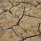 Dry Cracked Lake Bed by Bo Insogna