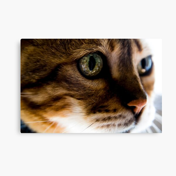 Tiggy wiggy big eyed cat Canvas Print