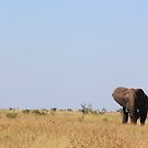 Lone Bull by ScalesNPO