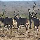 Trio of Kudu by ScalesNPO
