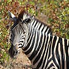 Mopani and Stripes by ScalesNPO