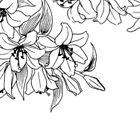 Flower Power by gmunoz16