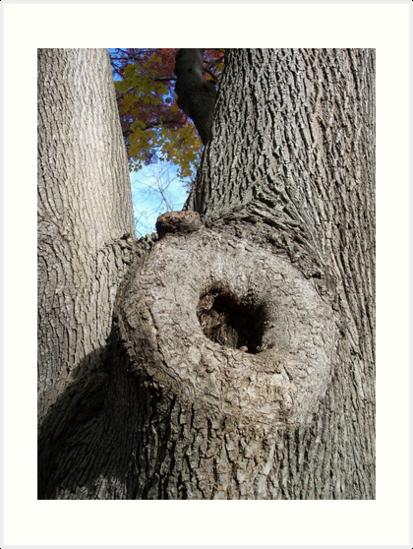 arbre porno