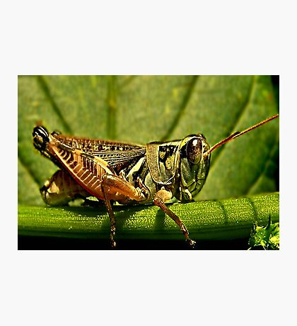 Green Grasshopper~The Country Hopper Photographic Print
