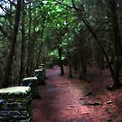 Pathway Above The Gorge by jules572