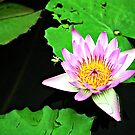 Water Lilly by Michael  Moss