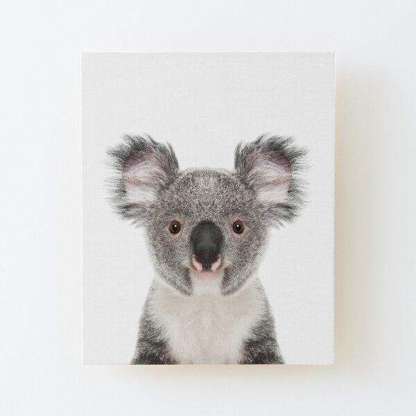 Retrato de oso koala Lámina montada de madera