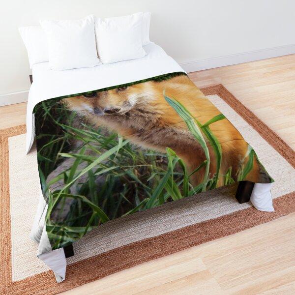 Curious Kit Comforter
