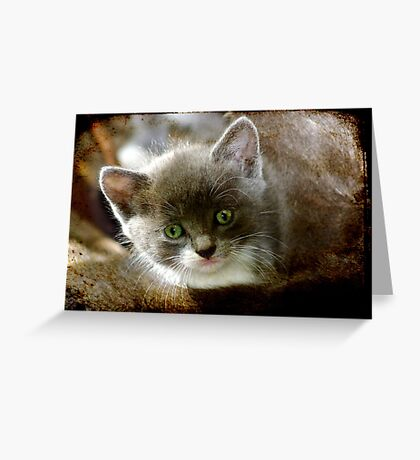 The Eyes of Innocence Greeting Card