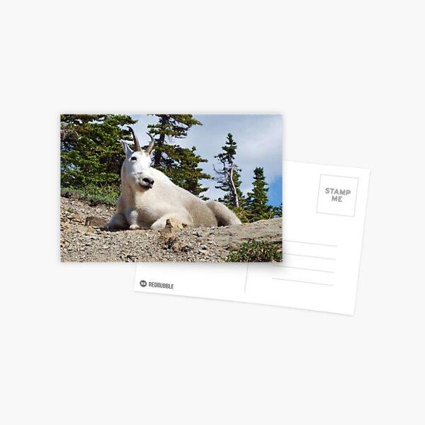 King of the Mountain Postcard