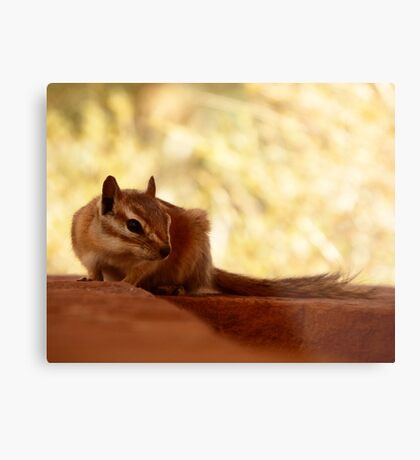 Its cool in the shade Metal Print