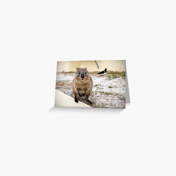 Quokka and friends Greeting Card