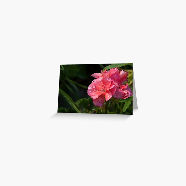 Pink flower with morning dew Greeting Card
