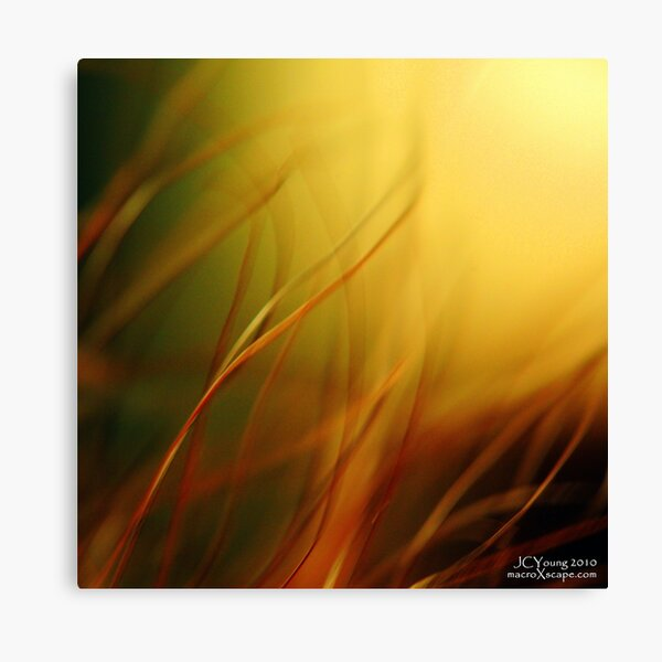 Sun Worshippers Canvas Print