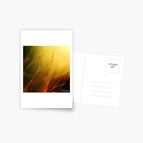 Sun Worshippers Postcard