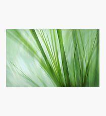 dancing grasses Photographic Print