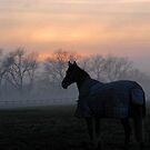 November sunset by Caroline Anderson