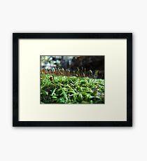 Little Wyrd Worlds Framed Print