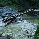 Ladder bridge - Slovak Paradise by Claire Haslope